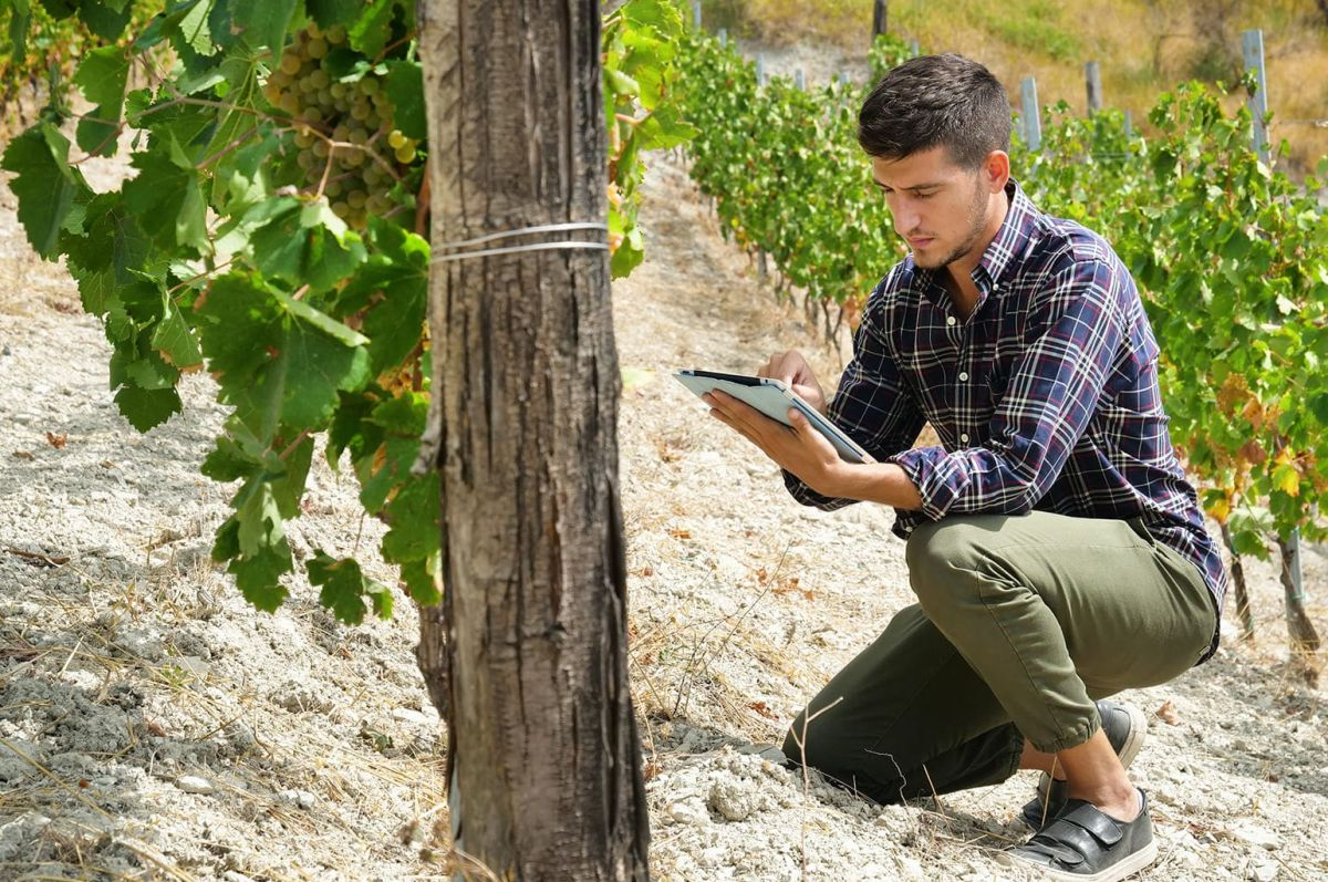 Top 10 Vineyard Management Software