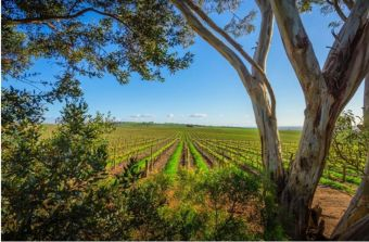 Photo for: 10 Vineyard Management Services in Sonoma