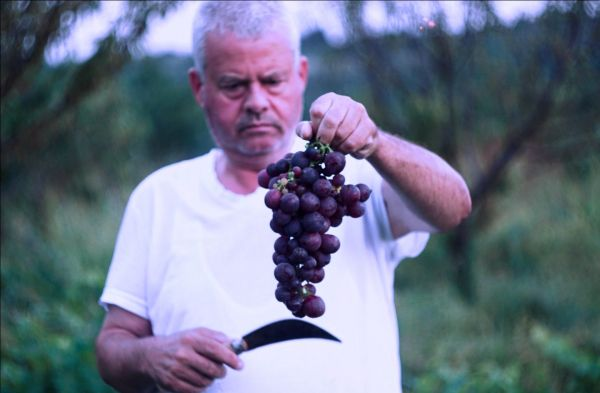 Photo for: Biodynamic Wines and Changed Ecosystem