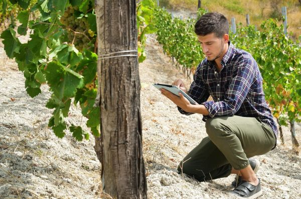 Photo for: Top 10 Vineyard Management Software