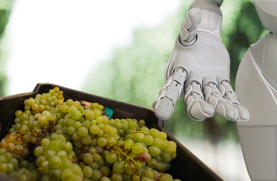 Photo for: How AI will Revolutionize the Future of Wine
