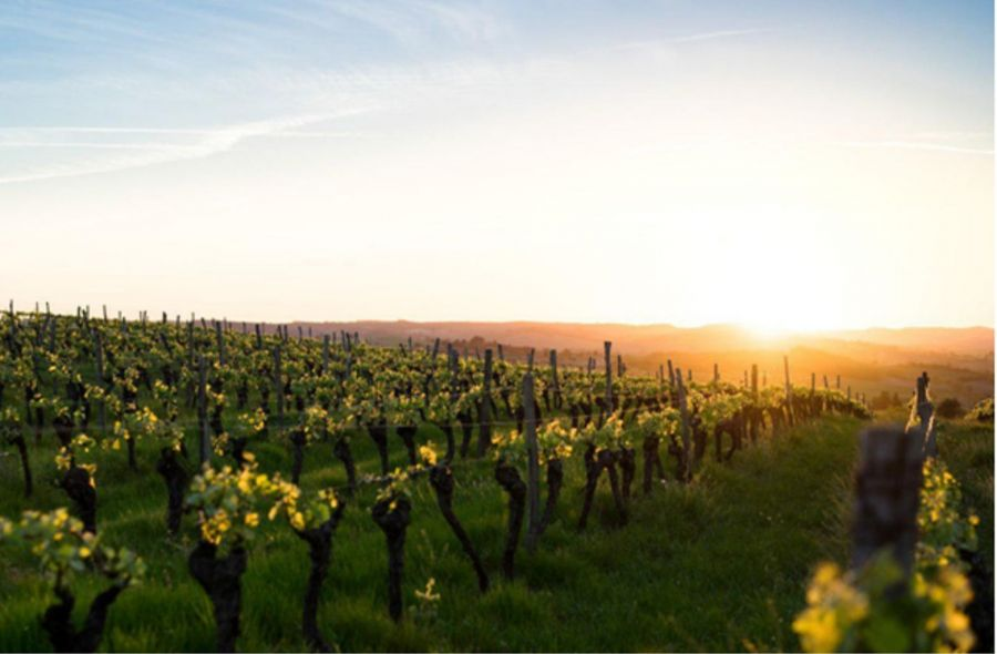 Photo for: Smart Irrigation via Sensors in the Wine World